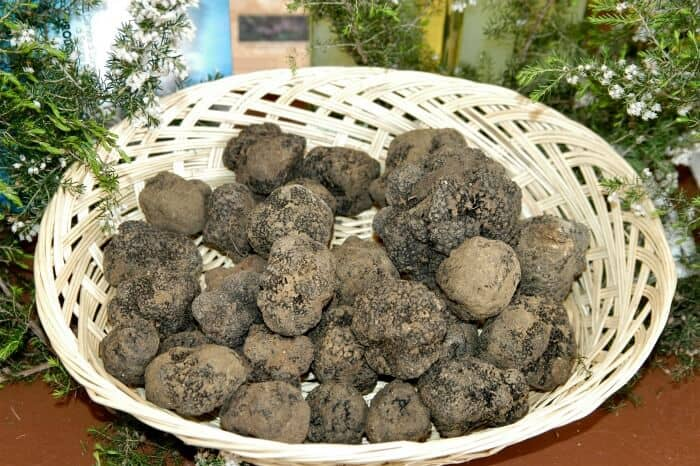 Truffle Season in Italy
