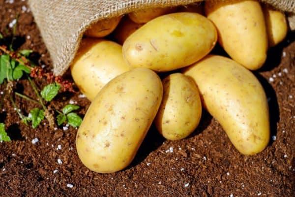 garden fresh potatoes