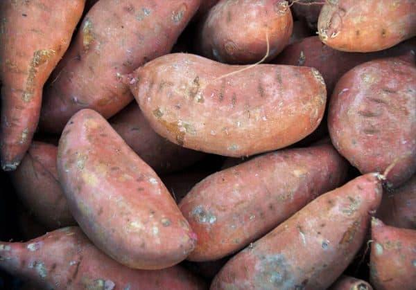 fresh picked sweet potatoes - Pixabay